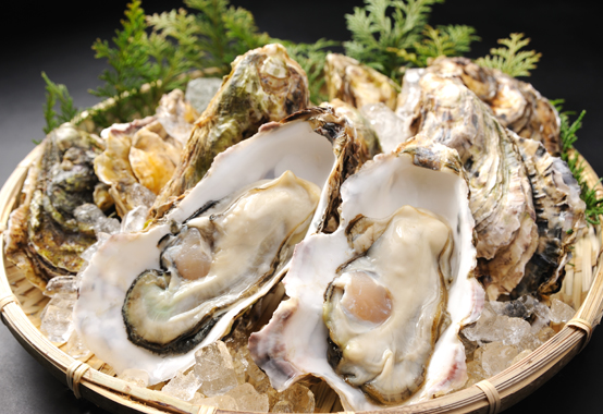 oyster_554_380